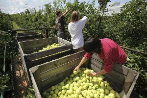 SAISONNIER ramasseur fruits