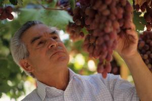 SAISONNIER Senior raisin