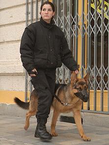 SECURITE chien